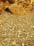 Peinture de roche Image stock