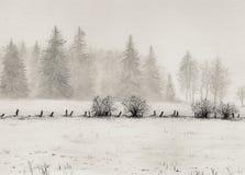 Peinture des arbres sur une montagne photos libres de droits