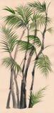 Peinture en bambou d'aquarelle de paume Images libres de droits