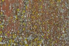 Peinture et lichen épluchés Photographie stock libre de droits