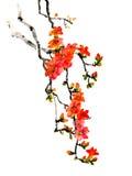 Peinture faite main d'encre de brosse traditionnelle chinoise antique - kapokier ; ceiba ; coton en soie Photo libre de droits