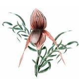 Peinture florale d'aquarelle Images stock