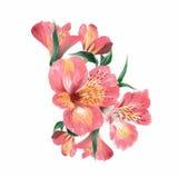 Peinture florale d'aquarelle Photographie stock