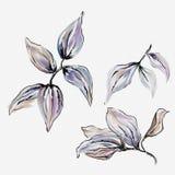 Peinture florale d'aquarelle Photos libres de droits