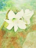 Peinture initiale du lis blanc, un art d'enfant Image stock