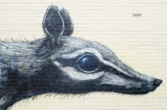 Peinture murale de Numbat, Fremantle, Australie Photos stock