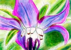 Peinture originale d'une fleur de bourrache illustration stock