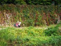 Peinture sans titre de femme dans la saison d'automne de Sanggye-Dong en octobre Photo libre de droits