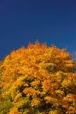 Peintures lumineuses d'automne Images libres de droits