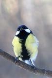 Peinzende vogel Stock Foto