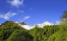 Peio Valley in South Tyrol, Italy Royalty Free Stock Photo
