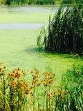 Peisage vert Photo libre de droits