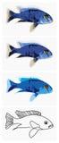 Peixe-azul-ahli ilustração do vetor