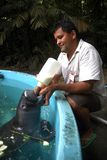 Peixe-Boi da Amazonia. Manaus, September 5, 2006.nProject save the manatee from the Amazon. Manatee being suckled by a caretaker at the aquarium of the National royalty free stock photography