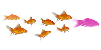 peixe dourado 3D Imagem de Stock Royalty Free