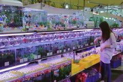 Peixe dourado da compra dos clientes no mercado da flor de taipei Imagens de Stock Royalty Free