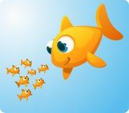 Peixe dourado gigante que olha peixes do bebê Imagens de Stock Royalty Free