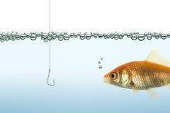 Peixe dourado que olha um gancho Imagens de Stock Royalty Free