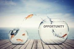Peixe dourado que salta ao aquário com texto da oportunidade imagem de stock