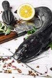 Peixe-gato dos peixes crus Fotografia de Stock Royalty Free