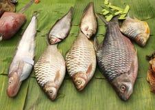 Peixe-gato recentemente travado na folha de palmeira em um mercado de peixes, Luang Prab Imagem de Stock Royalty Free