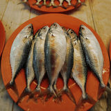 Peixes Foto de Stock Royalty Free