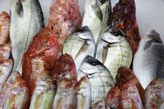 peixes Imagem de Stock Royalty Free