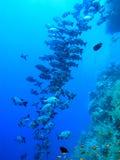 Peixes Imagens de Stock