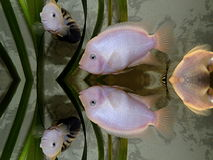 Peixes foto de stock royalty free