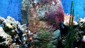Peixes Imagem de Stock