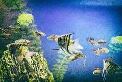 Peixes amarelos sob a água, cena do mar, filtro análogo imagens de stock