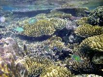 Peixes & coral tropicais Imagem de Stock