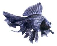 Peixes azuis do aquário (pintura da aquarela) Imagens de Stock