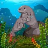 Peixes-boi que nadam sob o mar ilustração royalty free