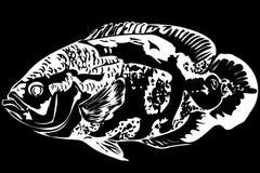 Peixes bonitos Astronotus do aquário Imagens de Stock