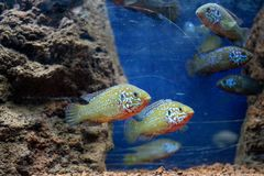Peixes bonitos no aquário foto de stock