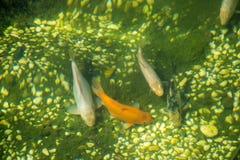 Peixes bonitos no aquário foto de stock royalty free