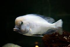 Peixes bonitos no aquário fotos de stock royalty free