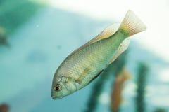 Peixes bonitos no aquário imagens de stock royalty free