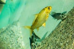 Peixes bonitos no aquário imagem de stock