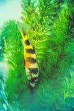 Peixes bonitos no aquário fotos de stock