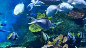 Peixes bonitos no aquário na decoração do fundo das plantas aquáticas Um peixe colorido no aquário vídeos de arquivo