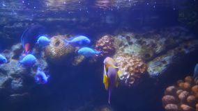Peixes bonitos no aquário na decoração do fundo das plantas aquáticas Um peixe colorido no aquário filme