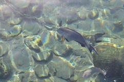 Peixes bonitos sob a água Fotografia de Stock Royalty Free