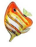 Peixes brilhantemente coloridos com listras alaranjadas com um esboço preto ilustração do vetor