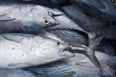 Peixes catched frescos no barco Fotografia de Stock