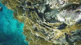 Peixes coloridos à procura do alimento entre os corais Mar Vermelho video estoque