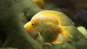 Peixes coloridos bonitos em um aqu?rio video estoque