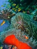 Peixes coloridos do recife coral Foto de Stock Royalty Free