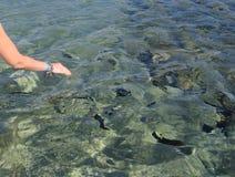 Peixes coloridos em um recife de corais no Mar Vermelho através da água imagens de stock royalty free